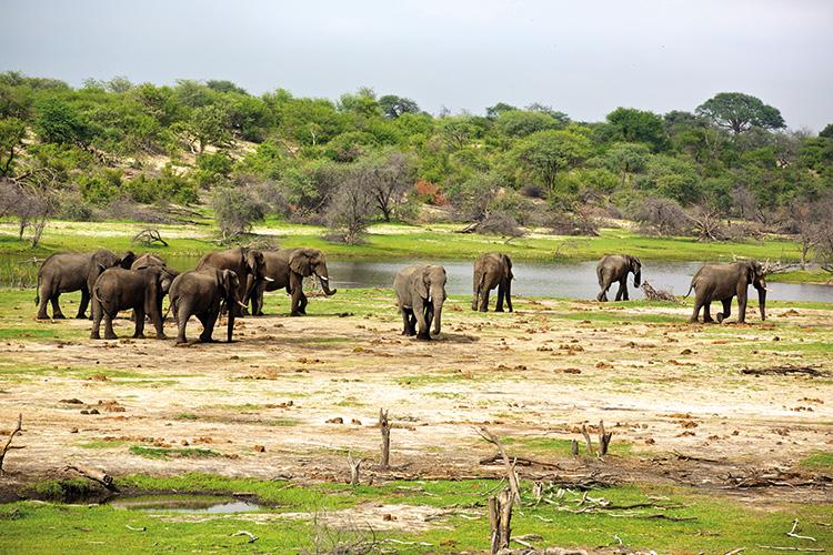 Makgadikgadi Pans Elephants