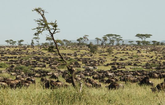 Explore the Serengeti National Park, Tanzania