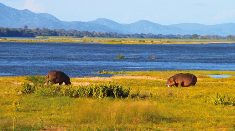 Mana Pools & South Luangwa