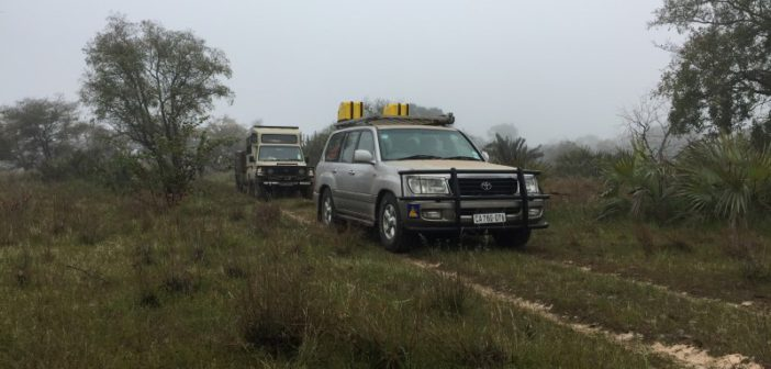 The convoy of Cruisers makes its way across the misty floodplains of Banhine.