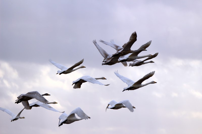 6. Water fowl tend to fly lower over water at the onset of a storm