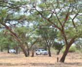 Wild Botswana: Part 1