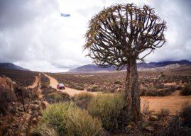 Beat the Blooms: Namaqua Coastal Route