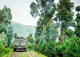 Rwanda: 7 must-do activities