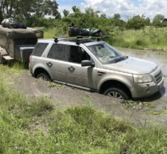 Stuck in the mud…. And a walk on the wild side….
