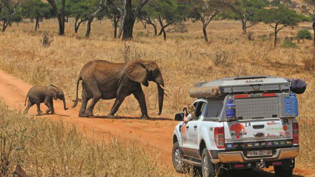 Adventure: Elephant Ignite