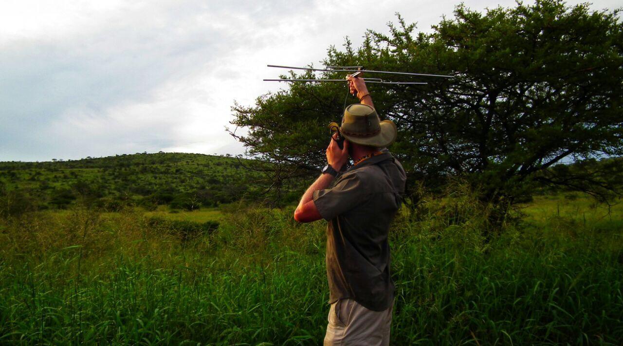 Cheetah tracking using telemetry